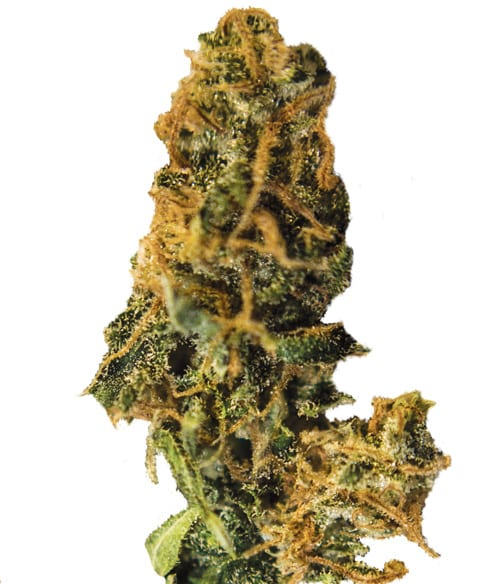 weed06
